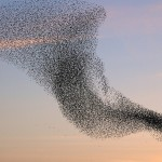 Swarm Collective Intelligence
