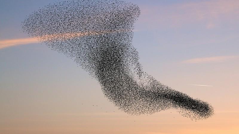 Bird Vortex