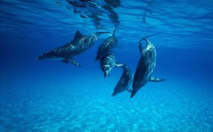 5 dophins